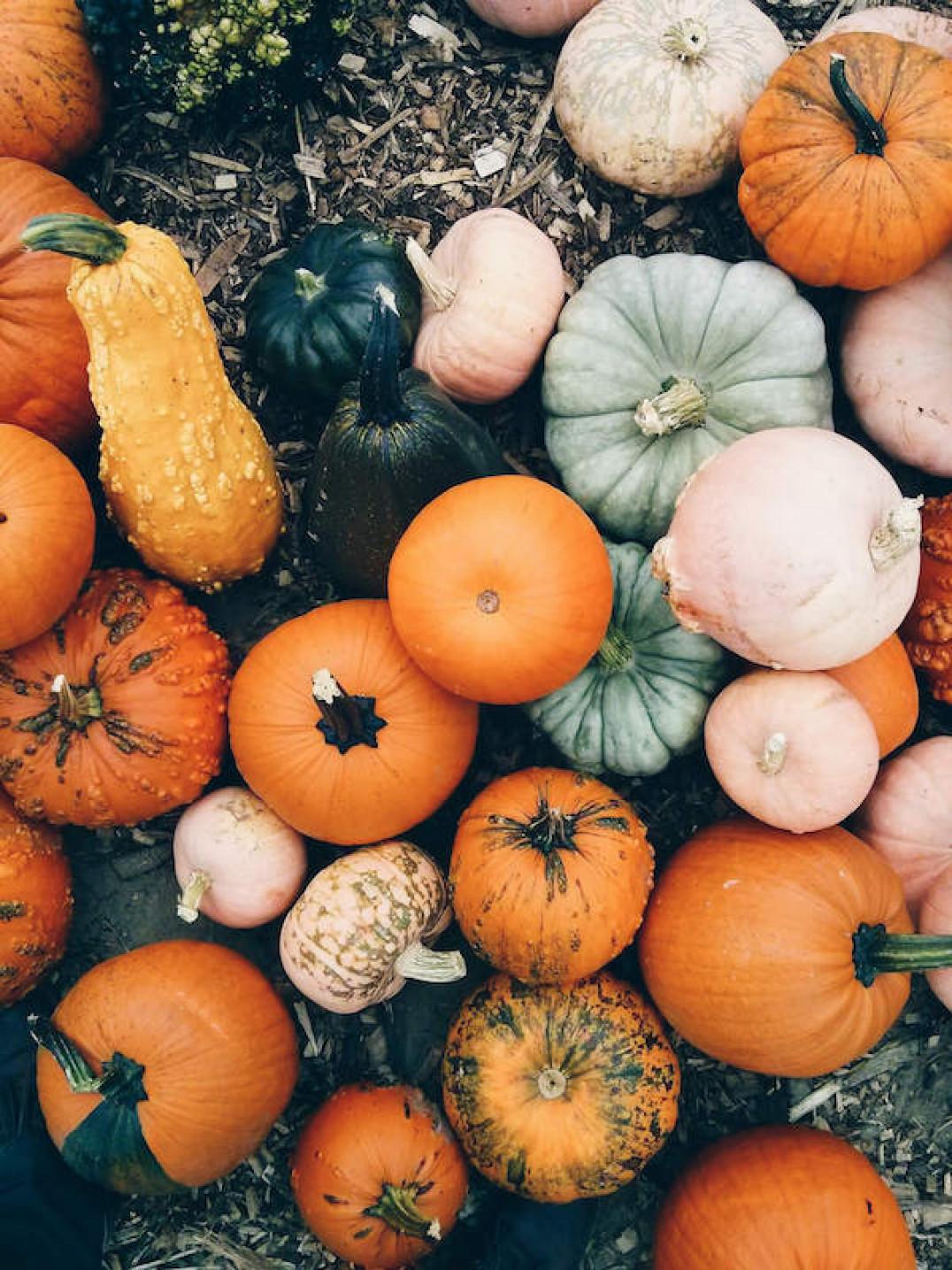 Branden Etheridge Pumpkin Photo